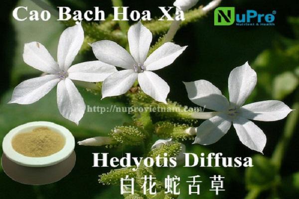 Cao bạch hoa xà