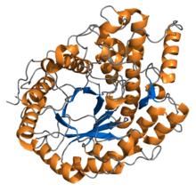 Enzyme amylase